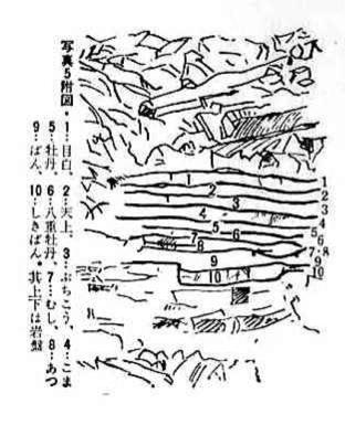 Mikawa layers